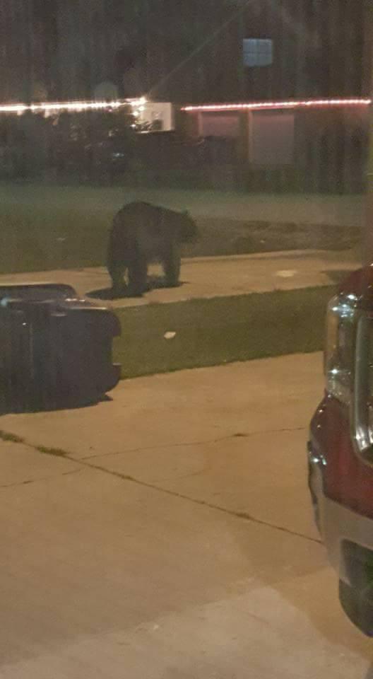 A bear is seen in a residential neighborhood in Patterson / Courtesy: Dwayne Scott