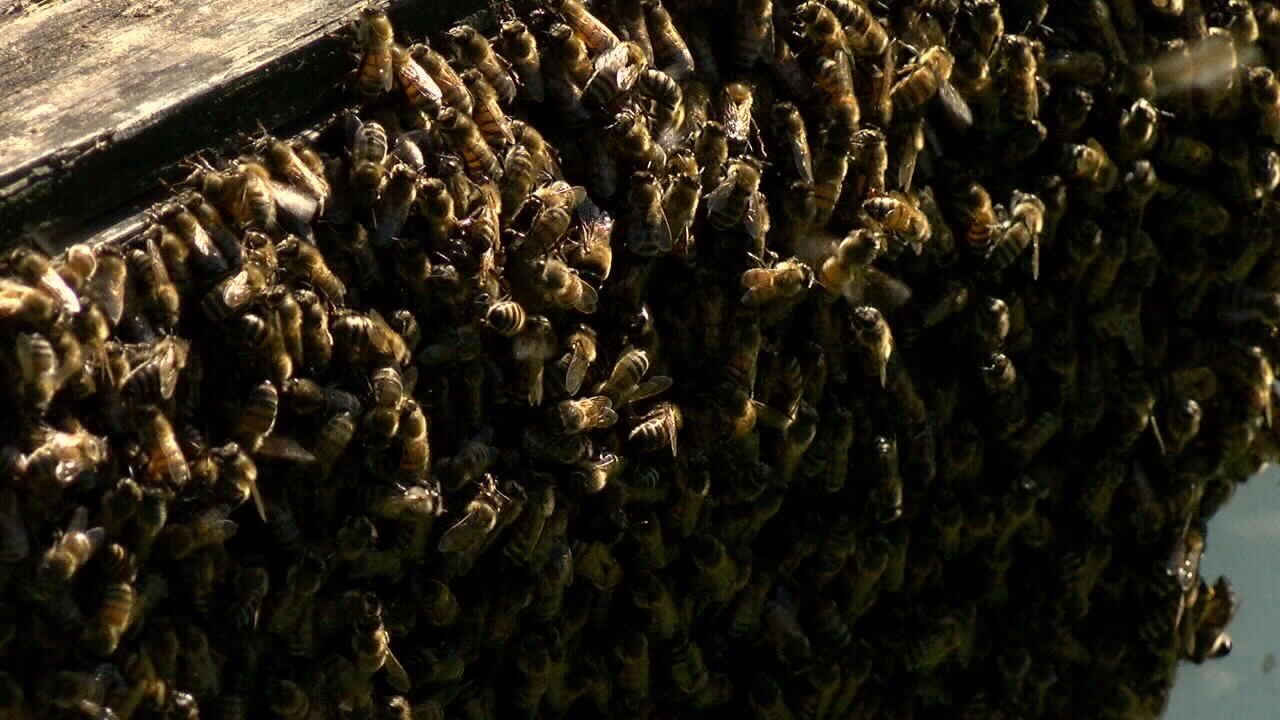 A local beekeeper lost 2,000 hives in the historic flood.
