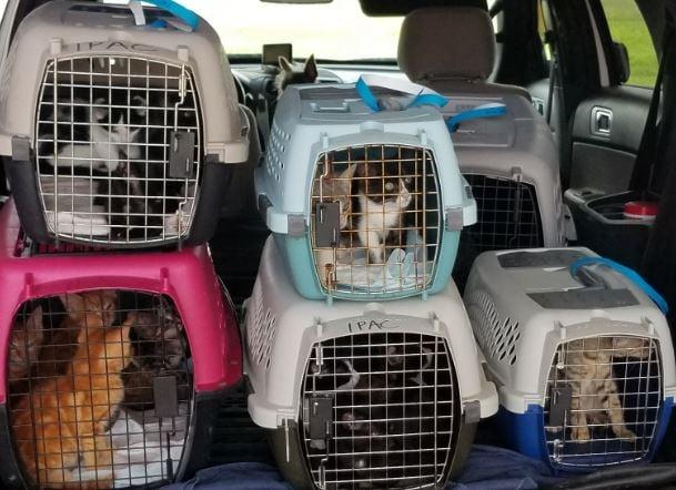 Animals in crates at Iberia Parish Animal Shelter / KATC