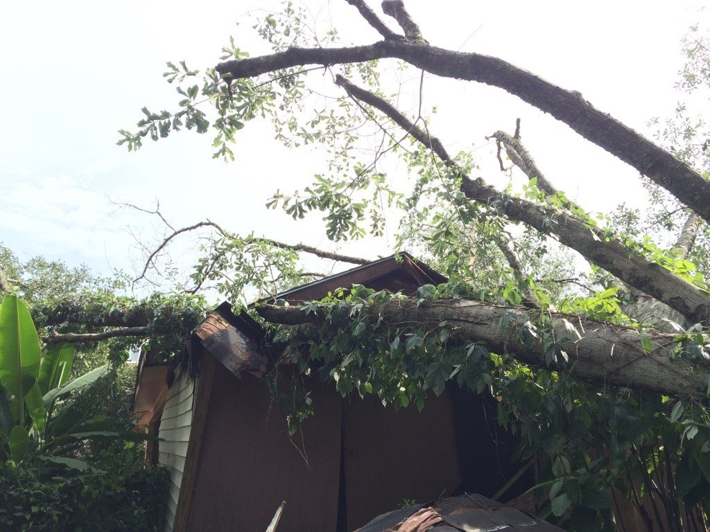 Tree falls on Terry Dr. home yesterday