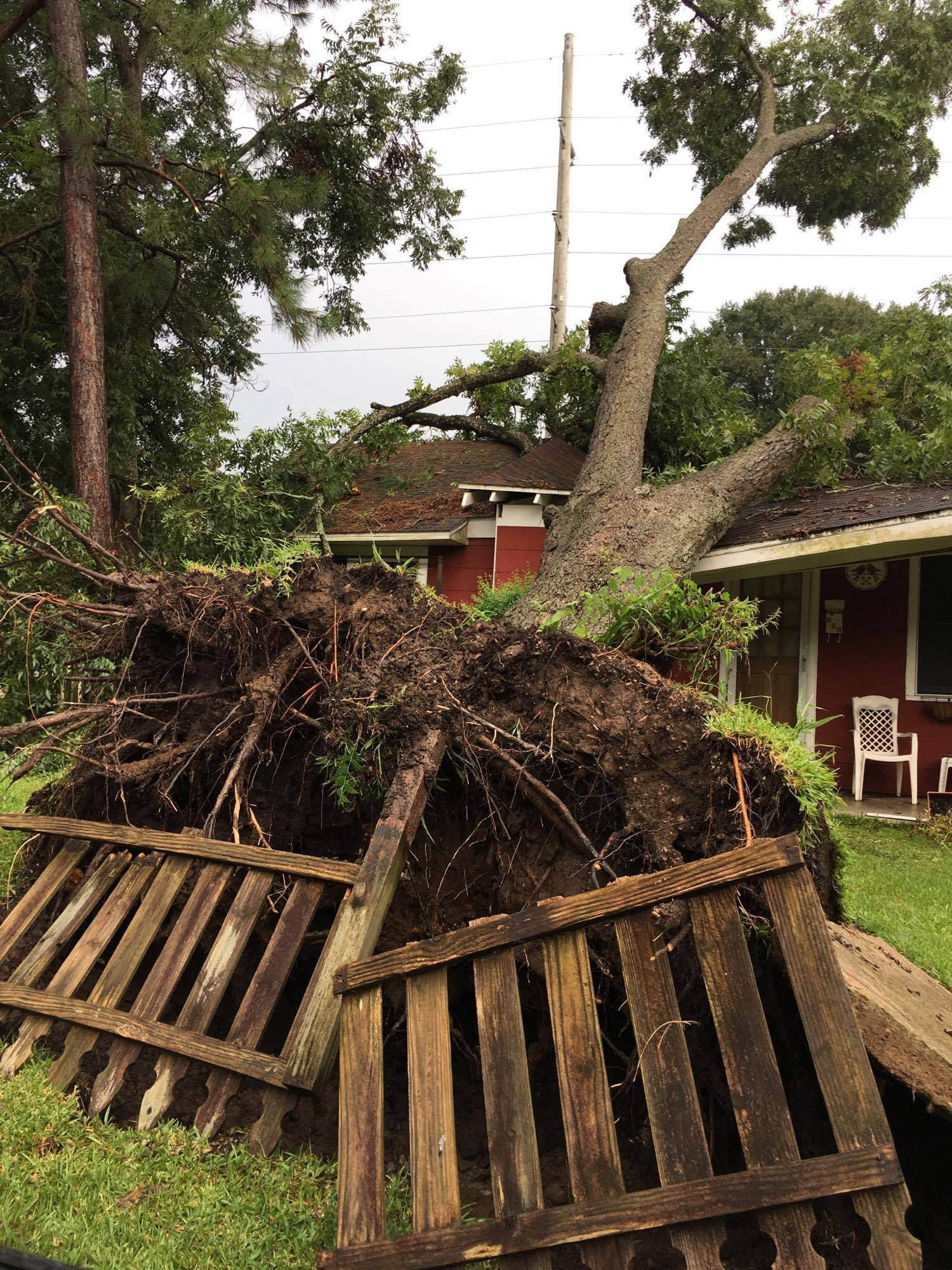 Severe weather uproots a tree on St. Thomas Street / Courtesy: Tiffany Fournier