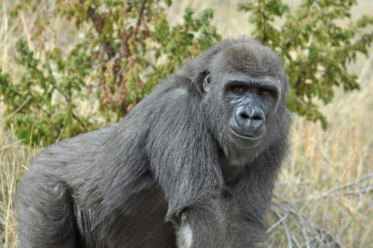 Tumani / Courtesy of the Cheyenne Mountain Zoo