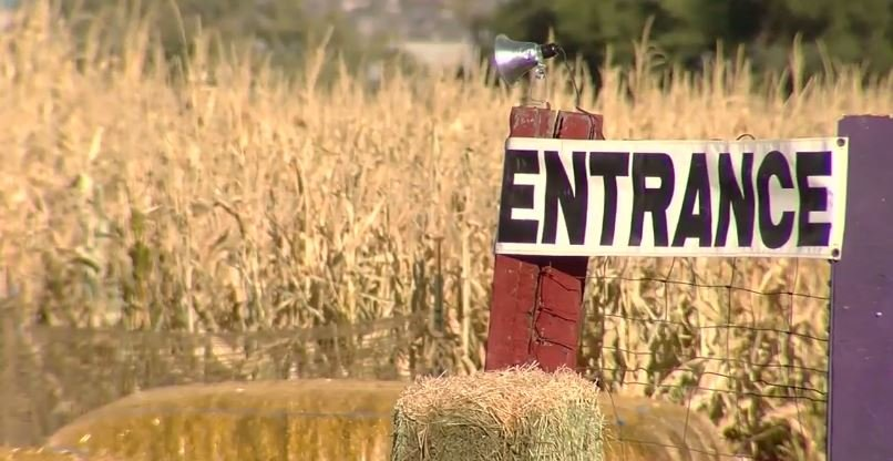 Boy lost at Utah corn maze spends night in welfare custody / Courtesy: KCRG