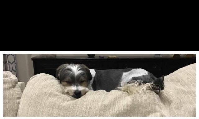 Dog missing from home / SMPSO