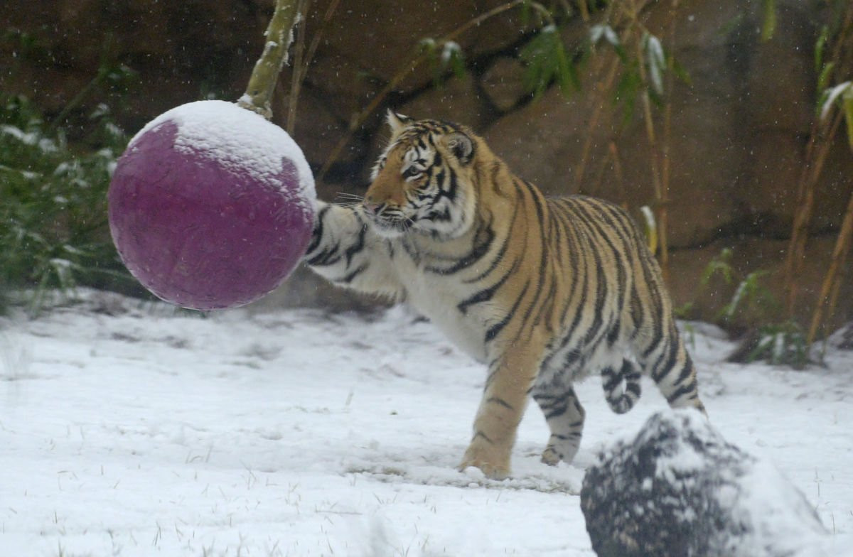 Mike VII plays in the snow / The Advocate