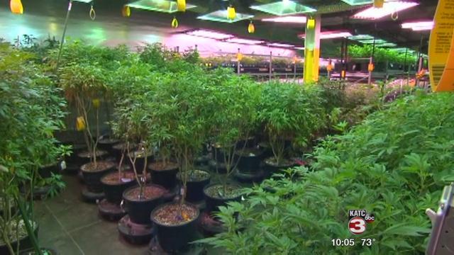 Medical marijuana sparks investors' interest / KATC