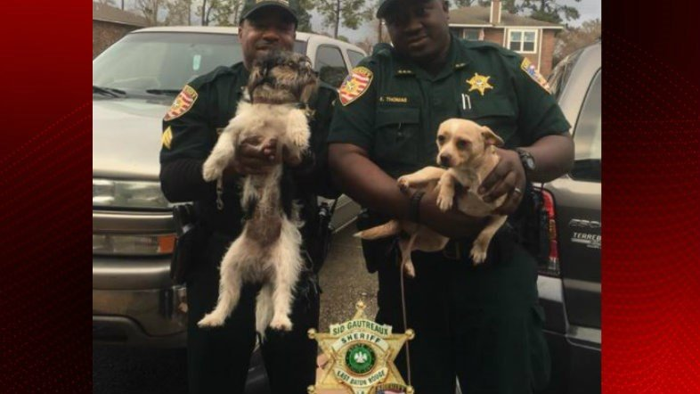 Two dogs found safe after video shows them being thrown while on leashes / East Baton Rouge Sheriff's Office