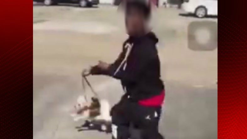 Shot from video where dogs were thrown while on their leashes / video shared with KATC