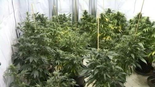 Recreational marijuana is legal in three states.