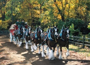 Budweiser Clydesdales coming to Crowley
